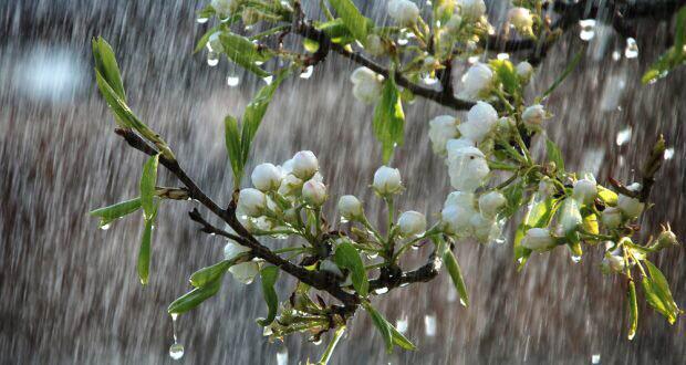 ANM anunta o primavara ploioasa