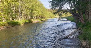 pescuitul la păstrăv